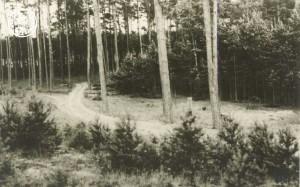 Wald der Alttomischler Forste Foto-Enderich