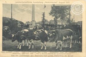 """Färse """"Edelweiß"""" - I. Preis; Herdbuchkuh """"Conkordia"""" 8316 - I. Preis; Herdbuchbulle """"Hofer"""" 796 - Ehrenpreis u. I. Preis; Herdbuchkuh """"Cousinchen"""" 8312 - I. Preis u. Bronzene Medaille der Landwirtschaftskammer - Aus der Zuchtherde des Besitzers Karl Linke, Kaisertreu (Kr. Bomst) - Die Postkarte stammt aus der Sammlung des Wojtek Szkudlarski"""