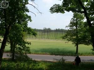 Blick von der Anhöhe  über die Hopfenfelder von Cicha Gora - Aufn. 05/2011