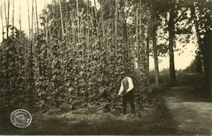Hopfenfeld am Landgraben in der Nähe des ehem. Witte Platzes 1928 - Aufn. Maennel-Archiv