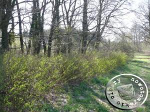 Das Gelände des ehemaligen Friedhofes - Aufn. PM