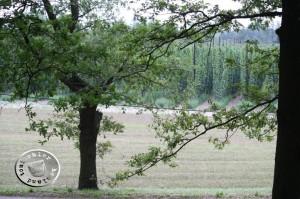 Blick über die Hopfenfelder von Cicha Góra