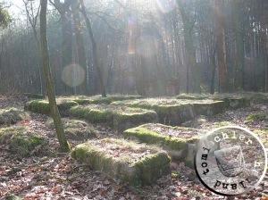 Der Friedhof im spätherbstlichen Licht / Aufn. PM
