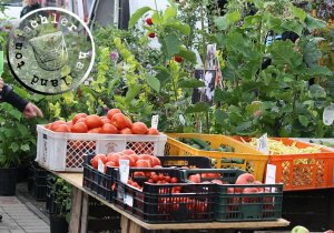 Tomaten, Gurken, Bohnen und Aepfel im Wochenmarkt-Angebot