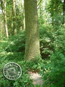 Versunkener Grabstein auf dem ehemaligen evgl. Friedhof Juliana / Aufn. PM